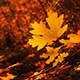 Autumn changes for Employment Law